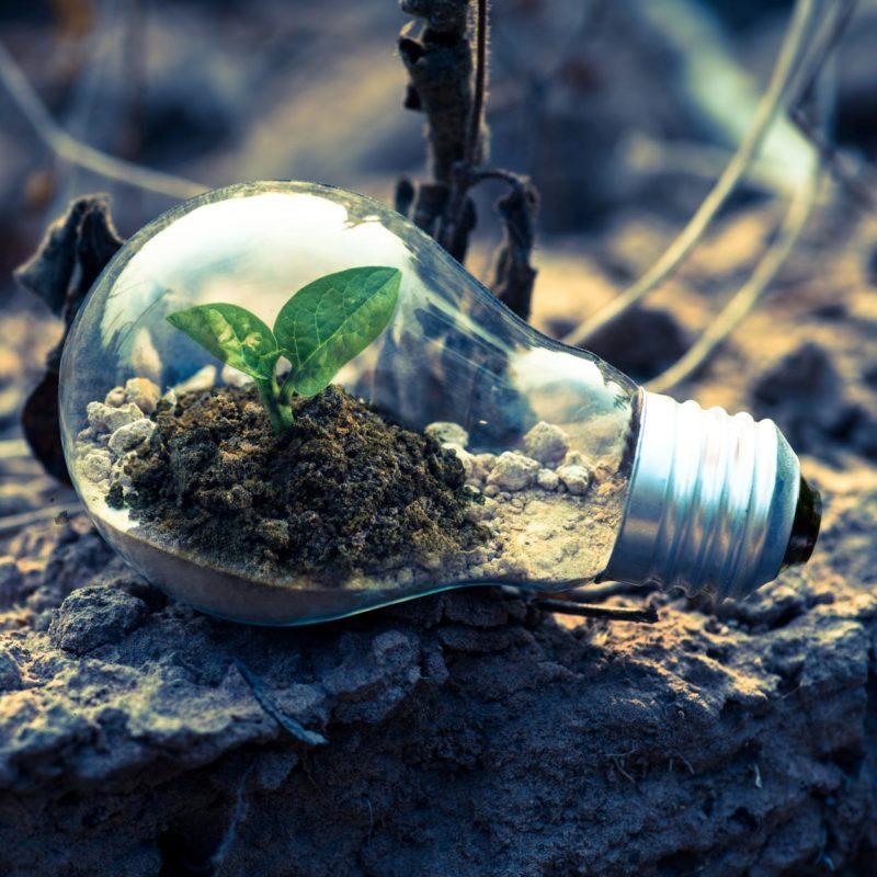 Les Idées Vertes #36 - Une vie pour l'environnement, portrait de Patrick Bourque